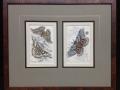 2 moth prints- shop