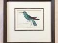 Hummingbird-antique-print-july2017