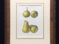 Pears-Print