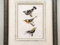 birds_antique_print