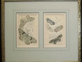 butterfly-prints