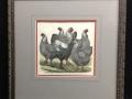 chickens-print