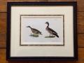ducks_antique_print